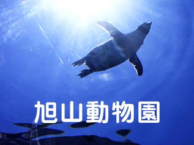 旭山動物園への旅