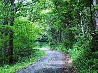【プラン⑤】団体専用列車で行く辰野町横川渓谷原生林トレッキングモニターツアー 2日間