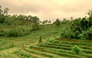 ウブド(バリ島)風景