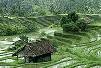 バリ州の文化的景観:トリ・ヒタ・カラナ哲学に基づくスバック灌漑システム