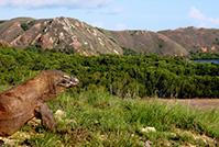 コモド国立公園