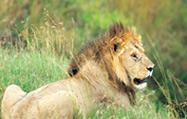 マサイ・マラ国立保護地区
