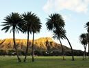 【関空発】ハワイアン航空で行く ハワイ島+ホノルル 6日【先どりスーパーセール】