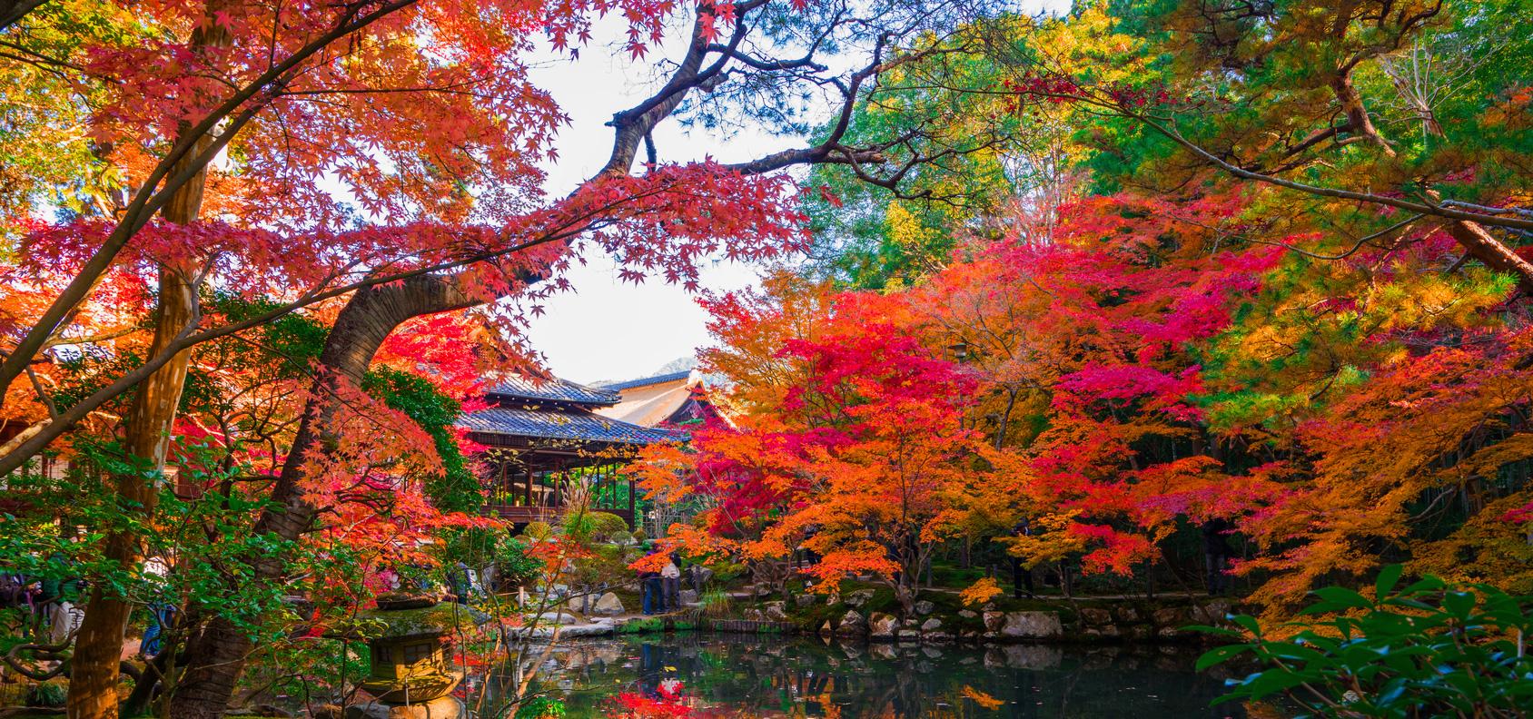紅葉旅行・ツアー特集 2017 | 国内旅行・国内ツアーは日本旅行