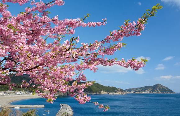 春の訪れを感じる九州ひな紀行・早春の河津桜鑑賞 3日間