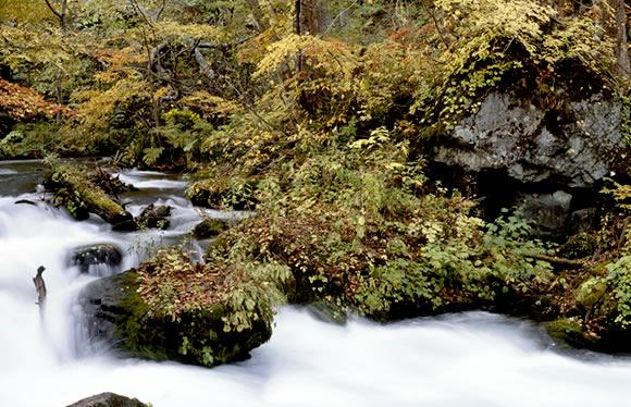 ひと足早い秋の紅葉が見られる北東北の名所を巡る 八甲田・奥入瀬・八幡平とイーハトーブの世界を訪ねる 3日間