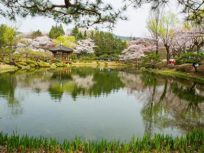 桜の古都・慶州と港町・釜山