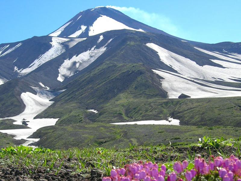 【ロシア】北の大地の短い夏に咲き誇る高山植物を愛でる旅 花のカムチャッカ 4・5日