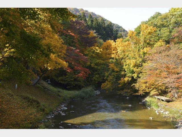 愛隣館庭園 秋イメージ