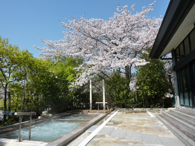 桜の季節の温泉大浴場 露天風呂