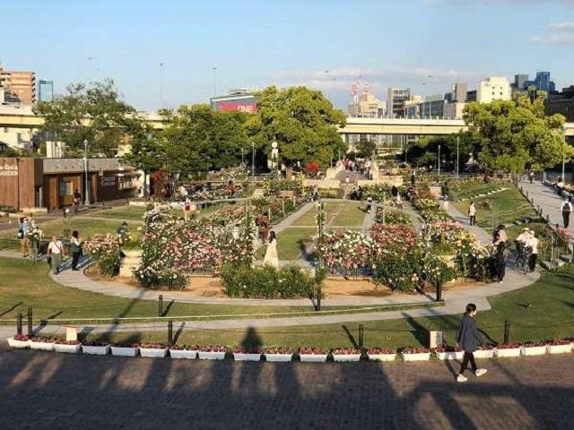 【近隣・観光】爽やかな風を感じながら「中之島公園のバラ園」さんです