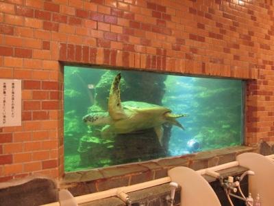 水族館大浴場を優雅に泳ぐ亀さん