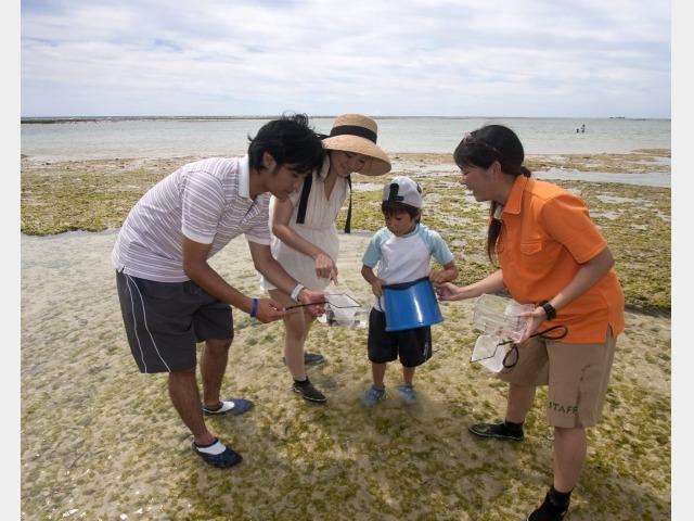 リーフトレイル 熱帯魚やカニなどの生き物探し。