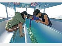 海人が案内するグラスボート