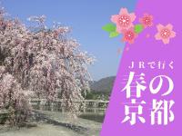 春の京都へJRで出かけよう♪