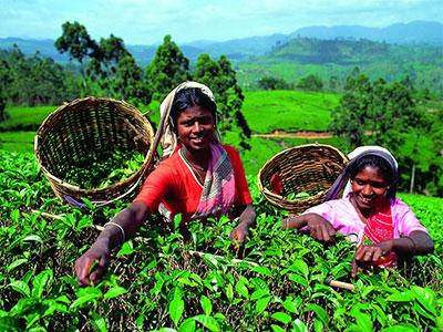 【成田発】スリランカ航空利用紅茶と鉄道の旅を満喫!スリランカ周遊8日【体験】
