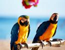 【羽田発】ハワイアン航空往復直行便利用ホノルル4・5・6・7日 往復送迎付き【先どり!ハワイ】