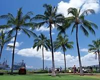 【羽田発】往復直行便利用ホノルル5・6日 往復送迎付き【盛りだくさんハワイ】