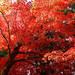 日本の秋を大満喫!日本全国おすすめの紅葉絶景スポット15選