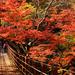 関東から日帰りや1泊で行ける福島・茨城・栃木の紅葉名所6選