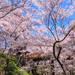 今年はこの桜絶景が見たい!春の到来を感じさせる日本全国のお花見スポット15選