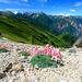 登山初心者でも登れる!全国屈指の人気を誇る長野県北アルプス「燕岳」登山