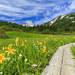 夏の白馬は花がいっぱい!!白馬Alps花三昧に行こう♪