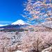 4月は春ならではの旅行がしたい!国内旅行でおすすめの場所は?