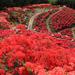 幻想的な赤色の世界に包まれる!国内にある赤の絶景スポット10選