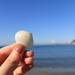 休日はビーチで貝殻拾い!逗子海岸でのんびり「ビーチコーミング」をしてみた
