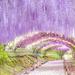 癒し効果たっぷり♡国内で紫の絶景を満喫できるおすすめスポット10選