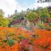 紅葉で彩られる!秋に訪れたい石川県加賀の國おすすめ紅葉スポット7選
