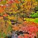 名所から穴場まで!豊かな自然に囲まれる東京の都心で紅葉さんぽ♪