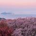 春の中四国で何する?魅力たっぷりの桜名所やお花畑の絶景から旬の春グルメまで