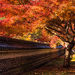 カメラ片手に大人の秋旅!岐阜県のフォトジェニックな紅葉スポット
