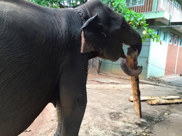 薪割りする象