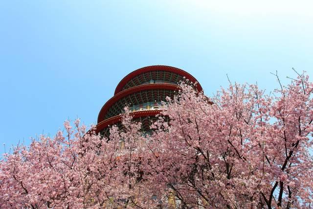 桜の名所・天元宮