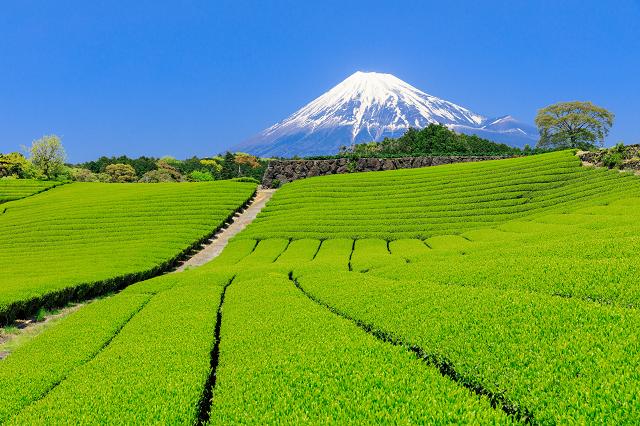 「静岡 お茶」の画像検索結果