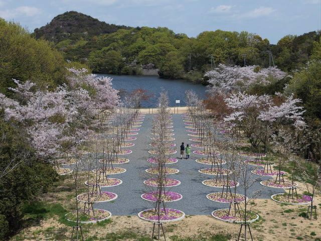 直島/安藤忠雄「桜の迷宮」