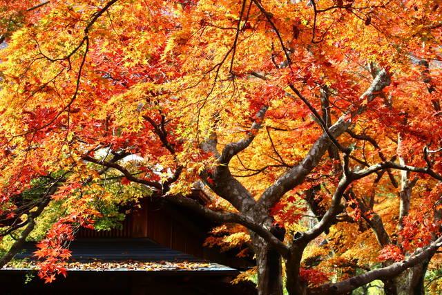 photo by tabibitokaoru (96818)
