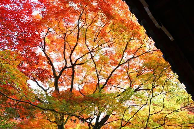 photo by tabibitokaoru (96825)