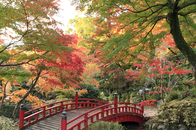 熱海梅園紅葉