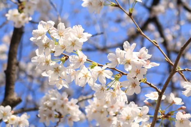 photo by tabibitokaoru (108894)