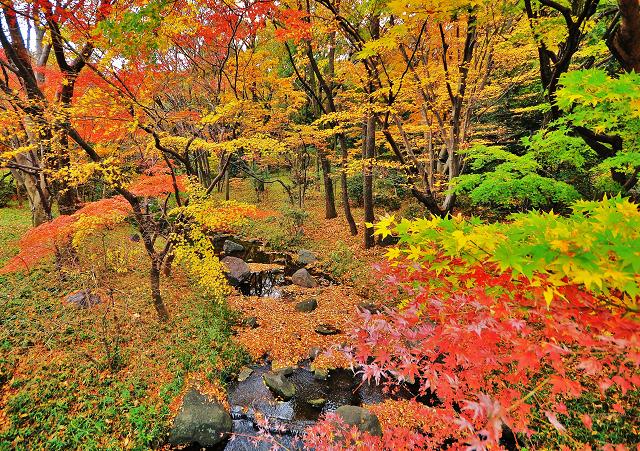 東京大回廊写真コンテスト入賞作品 「北の丸公園紅葉」増...