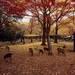 奈良県の旅行・ツアー情報を探す!