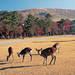 人気の奈良旅行・奈良ツアー