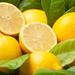 生産量日本一!冬が旬の広島瀬戸内レモンの産地生口島がすごい!