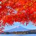 富士山ビューの絶景露天風呂も!紅葉見るなら河口湖がおすすめ♪