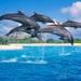 シーライフパーク オアフ島  / オプショナルツアー・日本旅行ハワイ