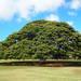 オプショナルツアー・日本旅行ハワイ
